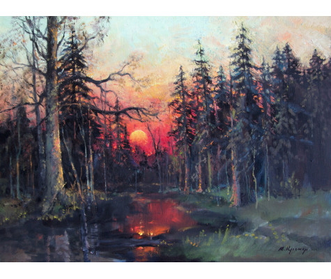 Evening in forest. Red sunset